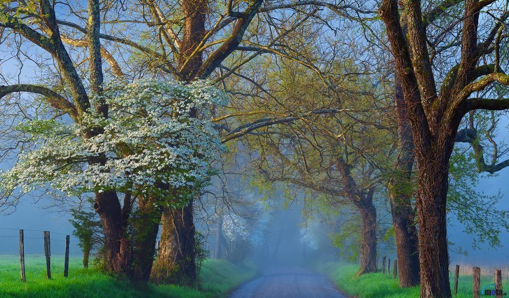 Tree Spring scene